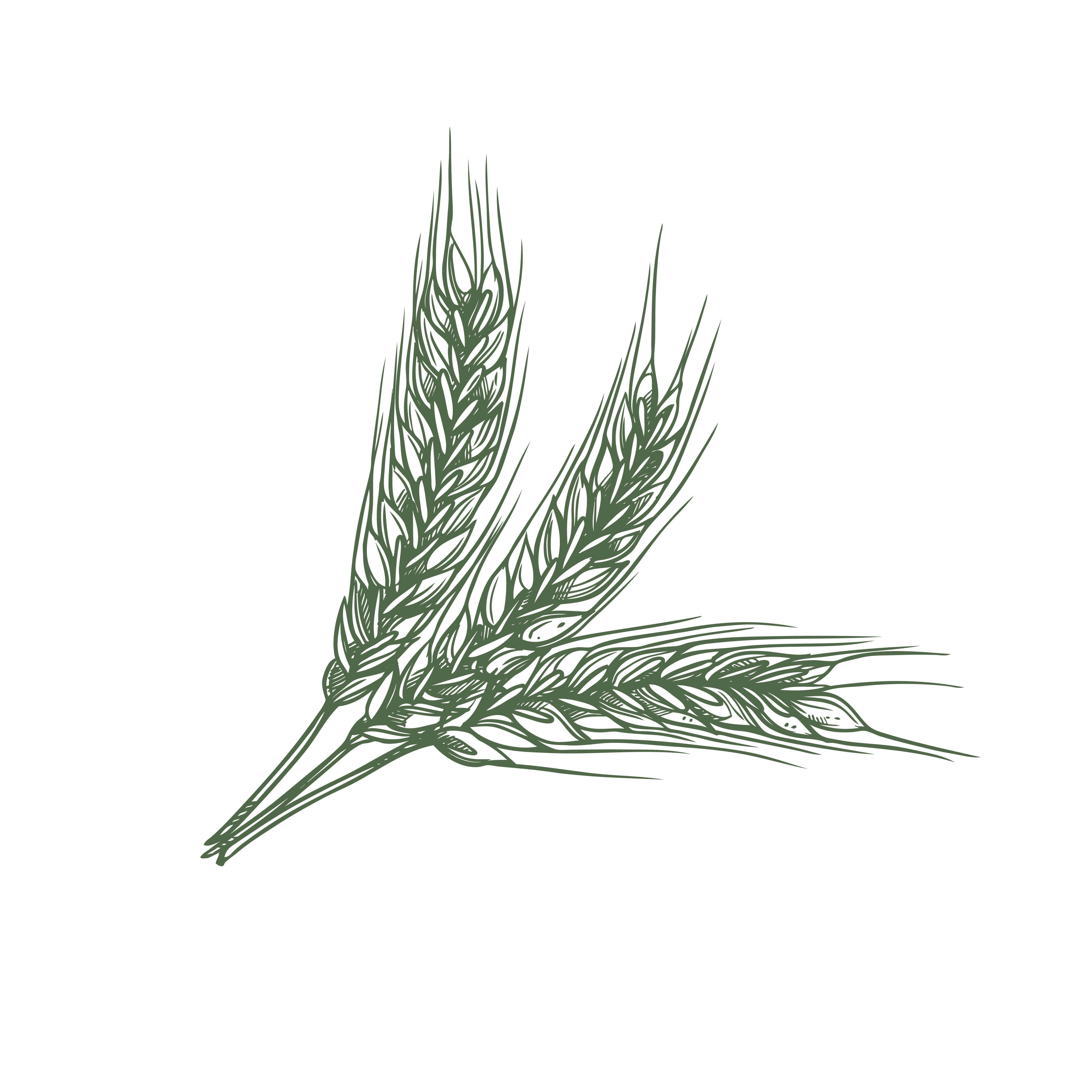 Grain Flori